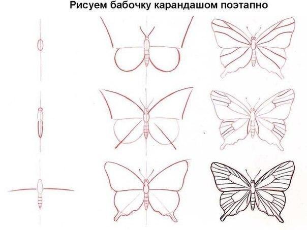 Как поэтапно нарисовать красивую бабочку карандашом